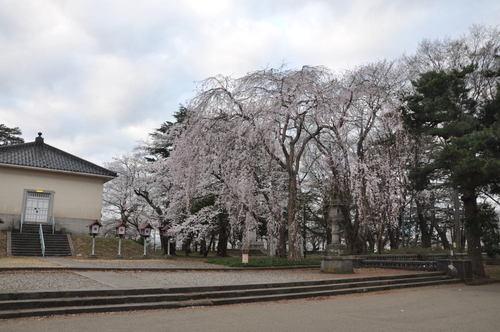 城下町高田百万人観桜会