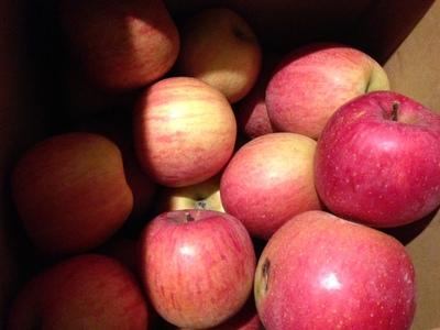B級リンゴ