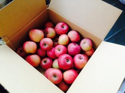 ジュース用リンゴ