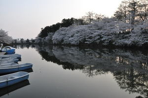 高田城百万人観桜会 3