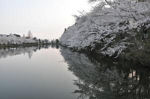 高田城百万人観桜会 4