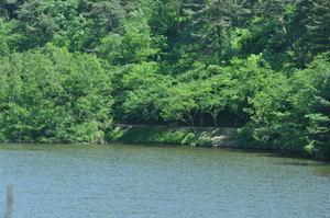 新緑の升潟