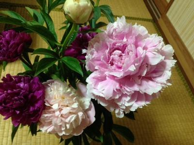 お仏壇の花