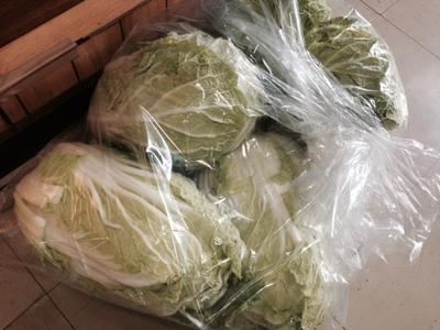 大玉の白菜