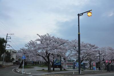 高田百万人観桜会