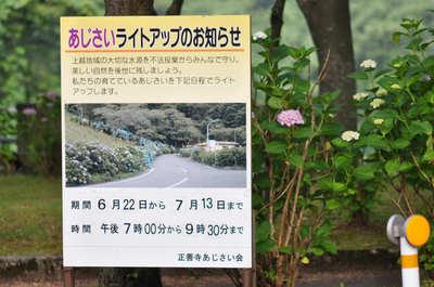 正善寺ダムの紫陽花